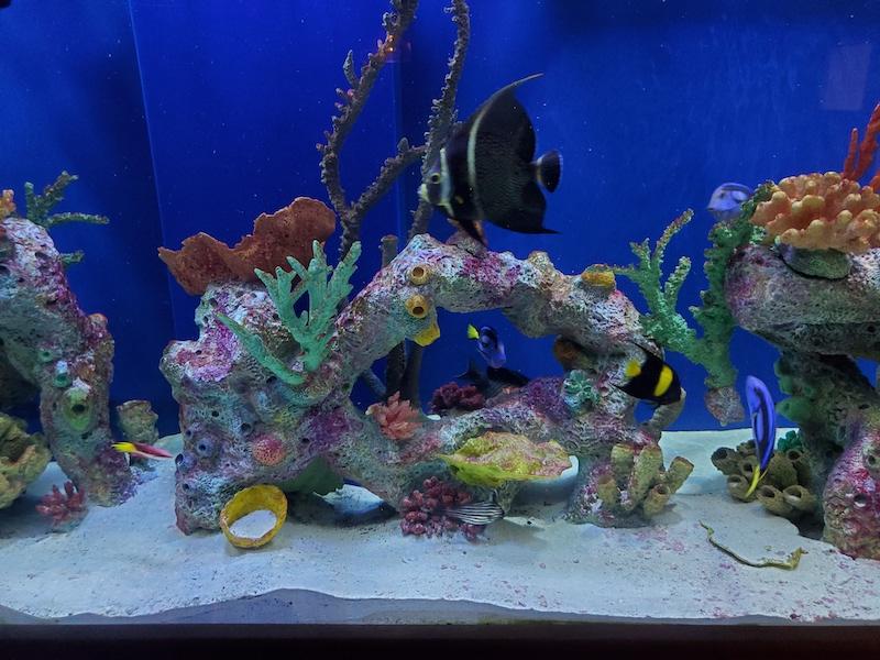 Crystal Oceans Coral Fish