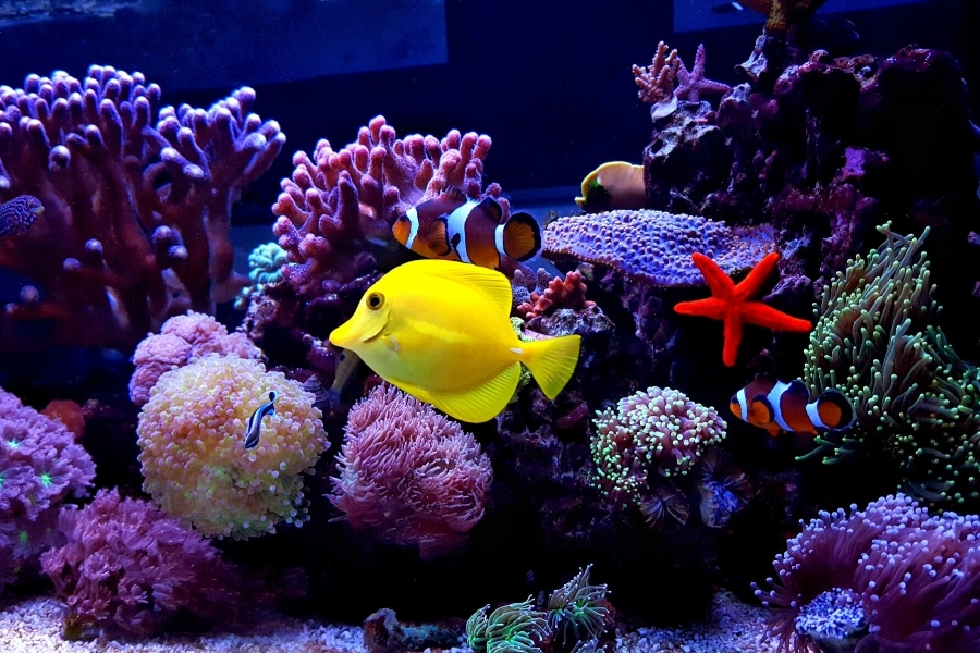 Right Fish For Your Saltwater Tank