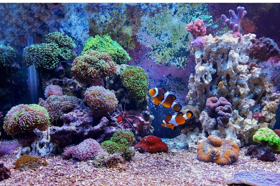 saltwater aquarium reef tank services