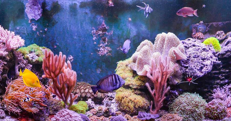 Aquarium Maintenance Services