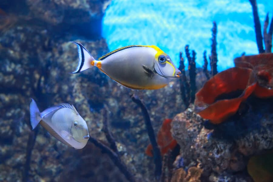 Aquarium Maintenance Services in Lighthouse Point