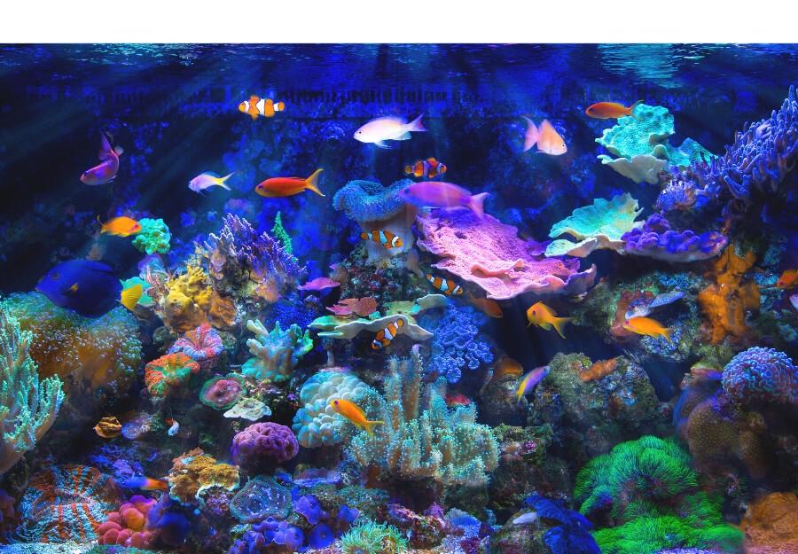 Saltwater Aquarium Maintenance Services