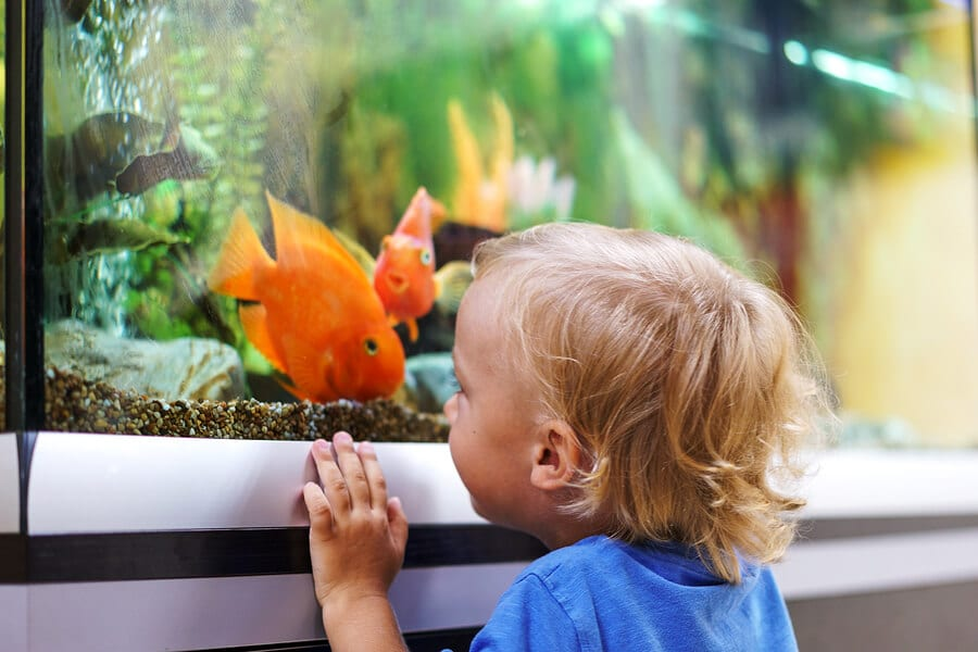 family fish aquarium