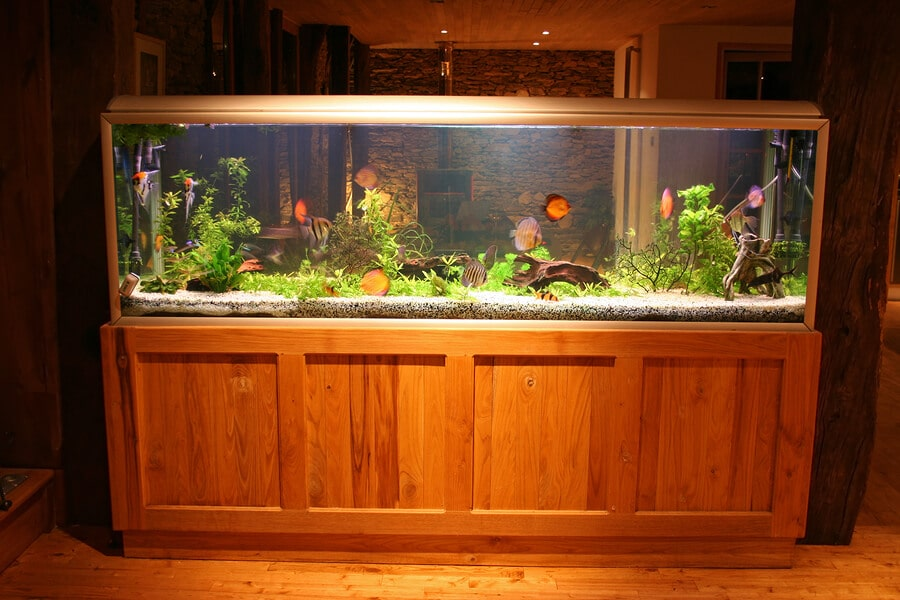 residential fish tank