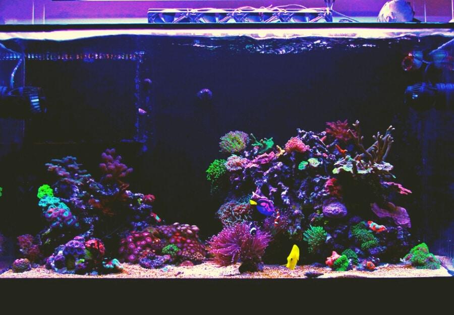 saltwater fish tank maintenance