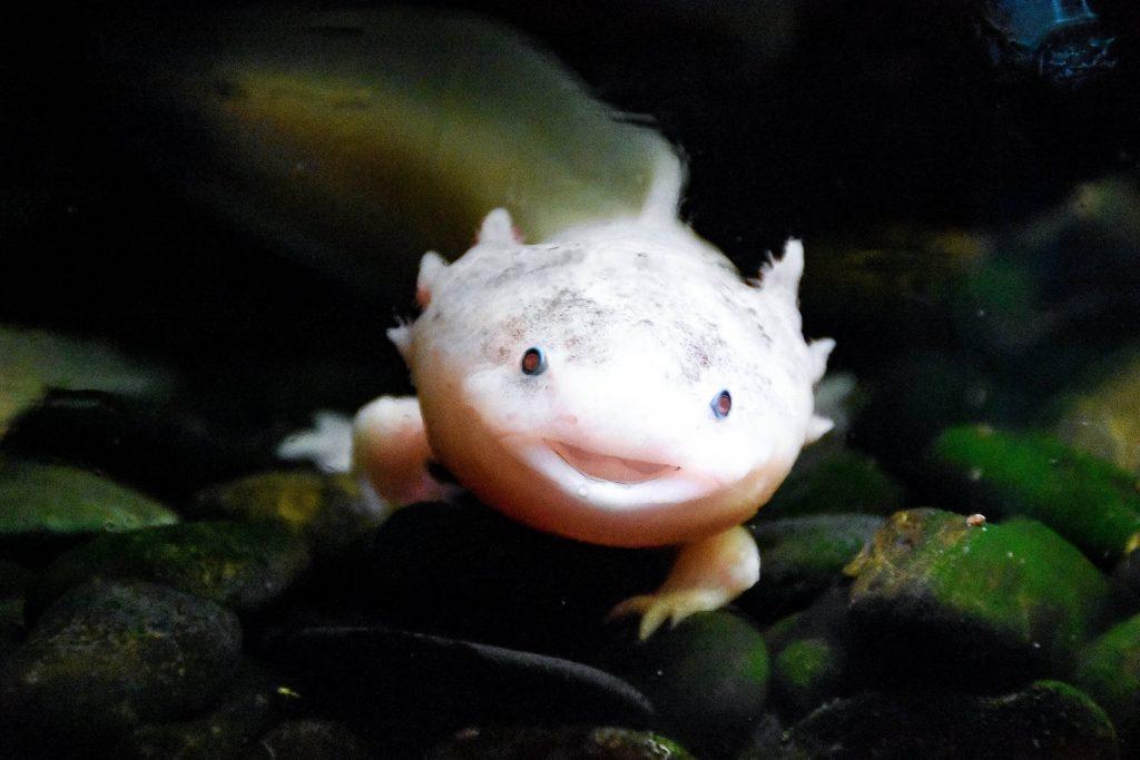 boca raton aquarium