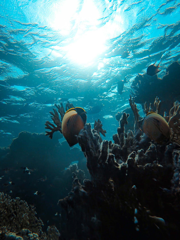 boca raton coral reef