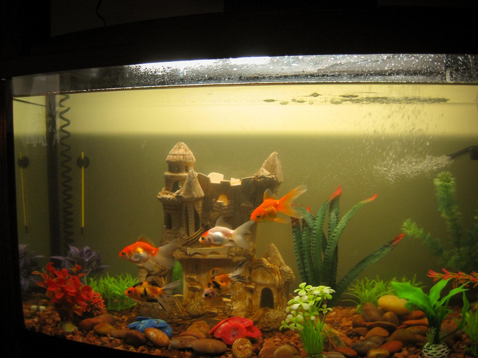 fish aquarium boca raton
