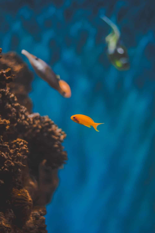 fish in boca raton aquarium