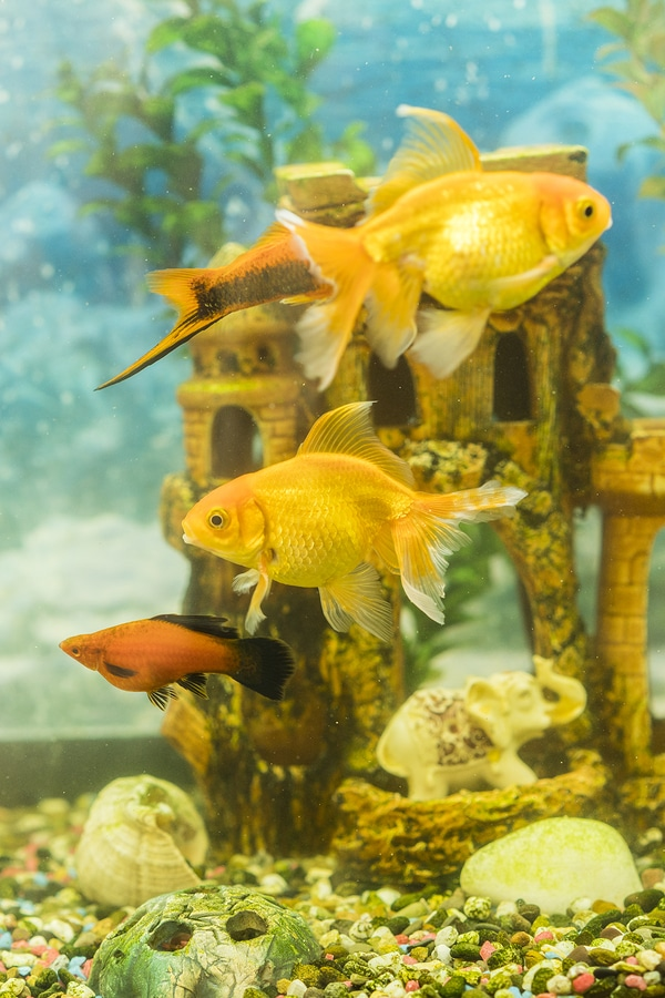 goldfish water parameters for hjome aquariums