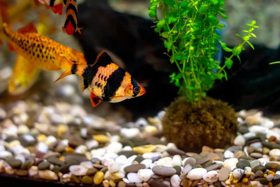 water parameters for home aquariums